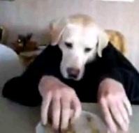 видео с псом