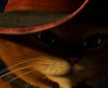 интересный кот